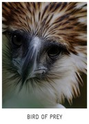 TFF2019 / BIRD OF PREY